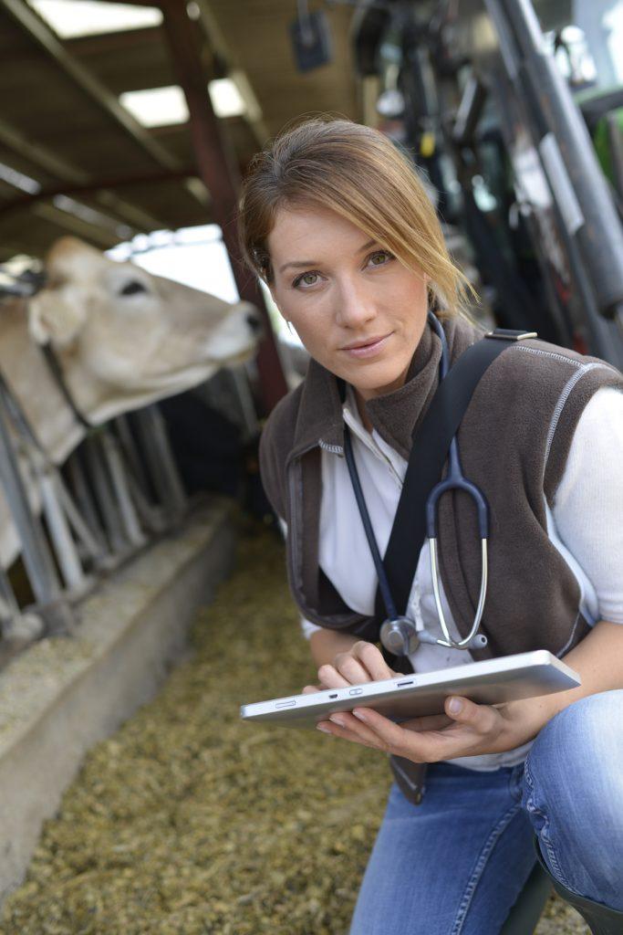 Tierarzt Großtierpraxis